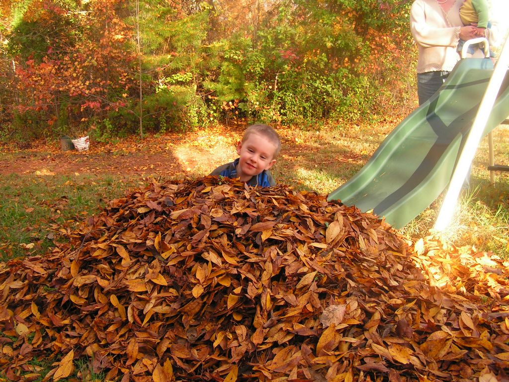 Pictures - Playing in a Pile of Leaves 2009 Page 1 ...